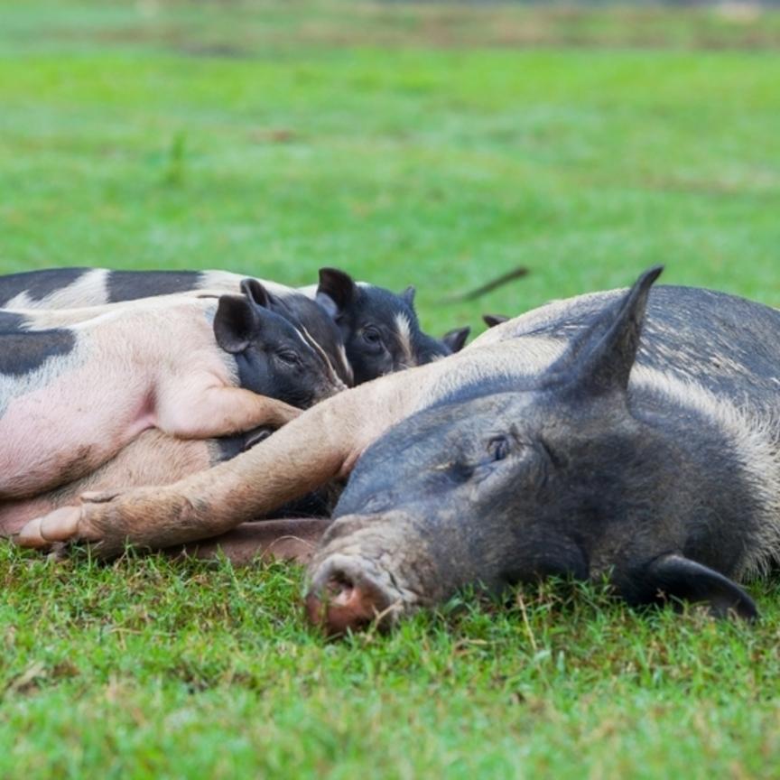 Benessere animale: in Italia vince Barilla e Coop entra in classifica