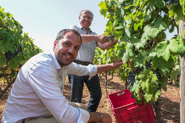 """Consorzio Vini """"Gioia del Colle"""": nominato il nuovo presidente"""