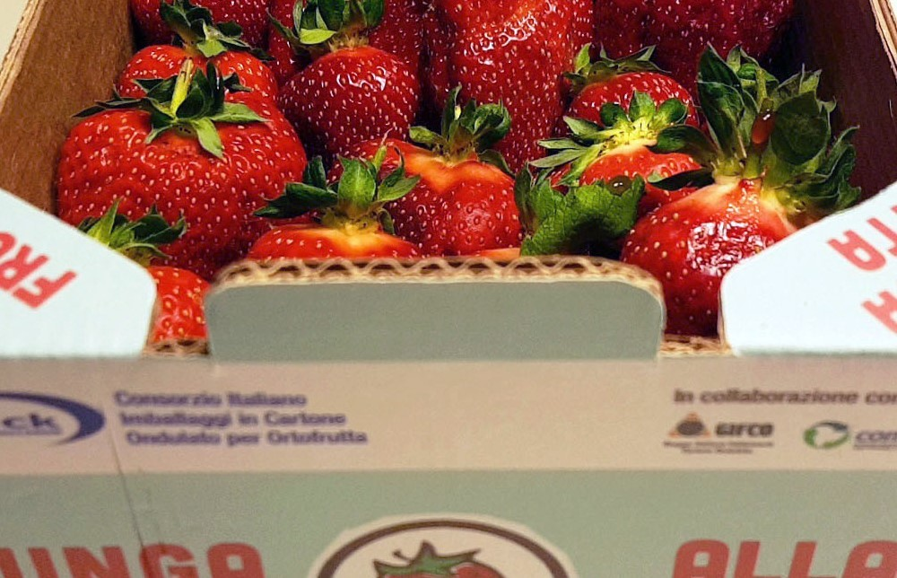 Cresce in Gdo l'imballaggio Attivo!, il packaging anti spreco che allunga la shelf life della frutta