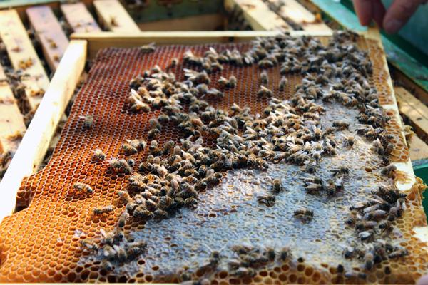 """Fattoria Scaldasole sostiene il progetto """"Bee my Future"""""""