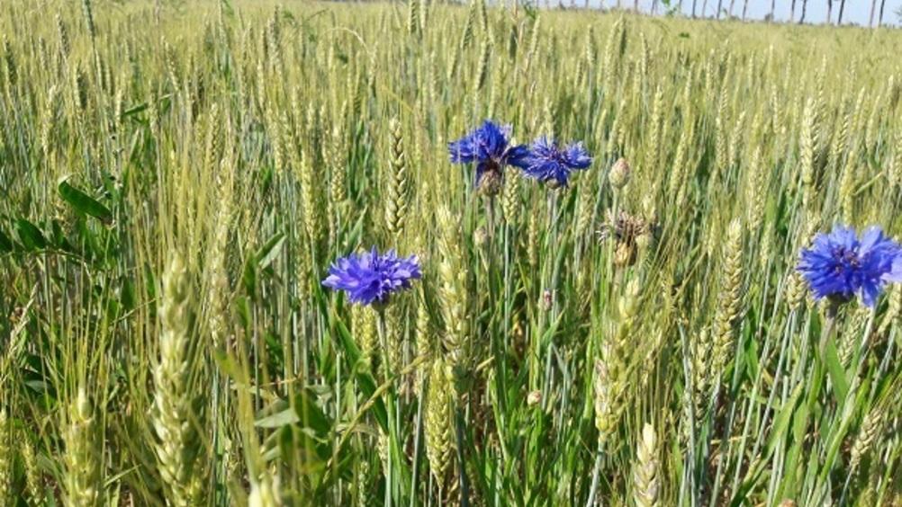 Biodiversità: l'agricoltura di NaturaSì riparte dalle infrastrutture verdi
