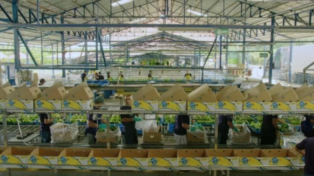 Chiquita: aggiornato il Rapporto sulla sostenibilità