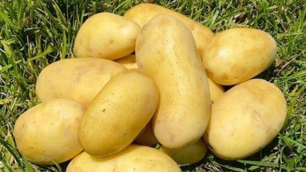 Romagnoli: annata positiva per le patate emiliano-romagnole