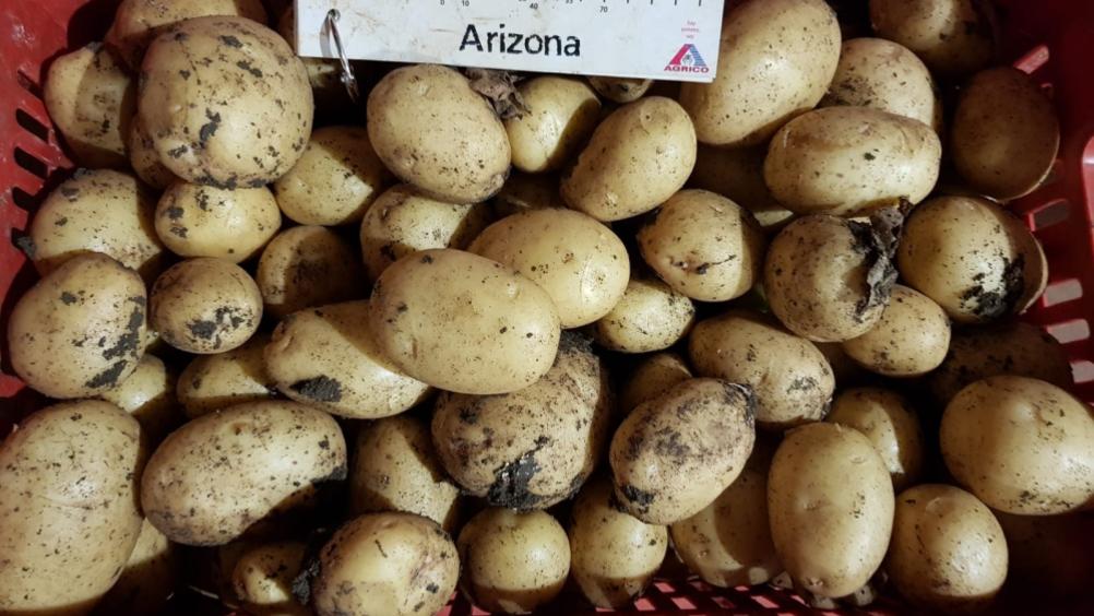 Romagnoli dona 50 tonnellate di patate a Banco alimentare Emilia-Romagna