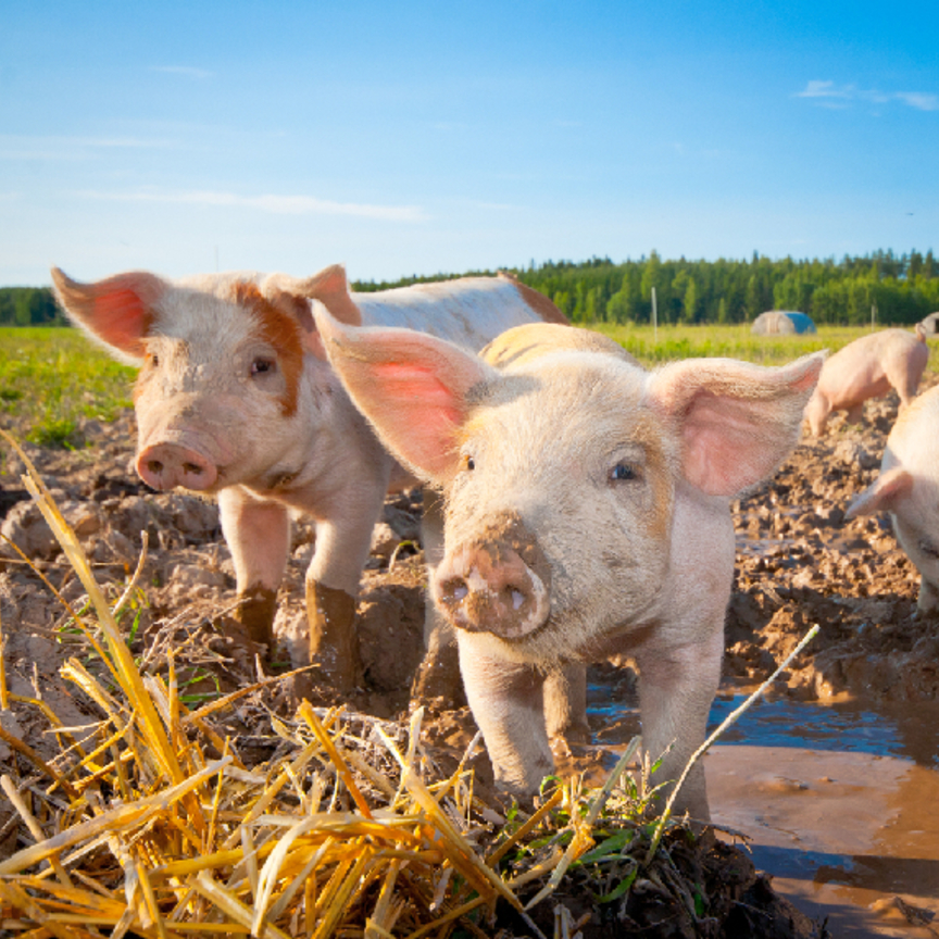 Benessere animale: una strada ancora lunga