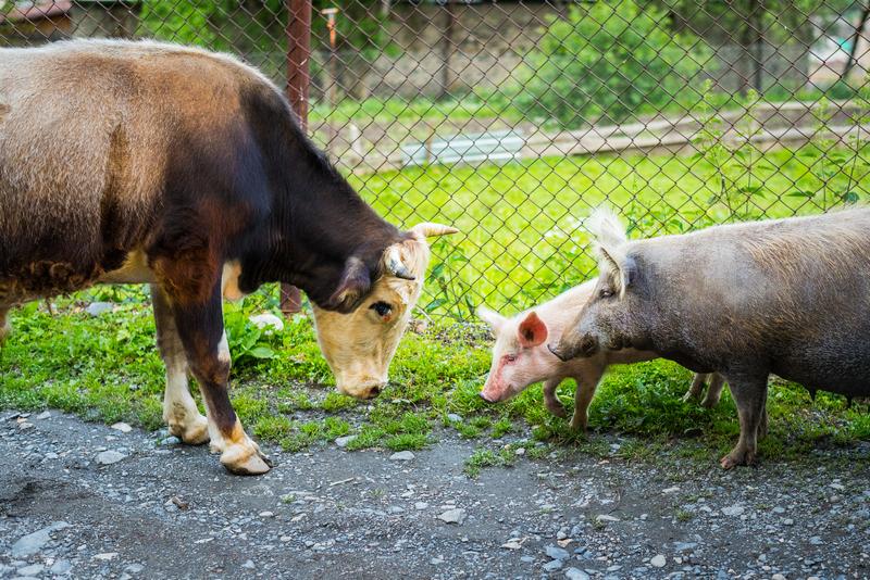 Promossi e bocciati in benessere animale