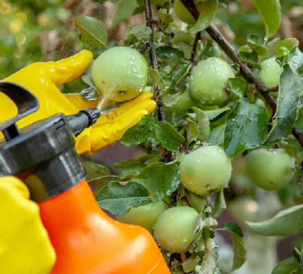 Pesticidi nel piatto: il vero problema è il multiresiduo