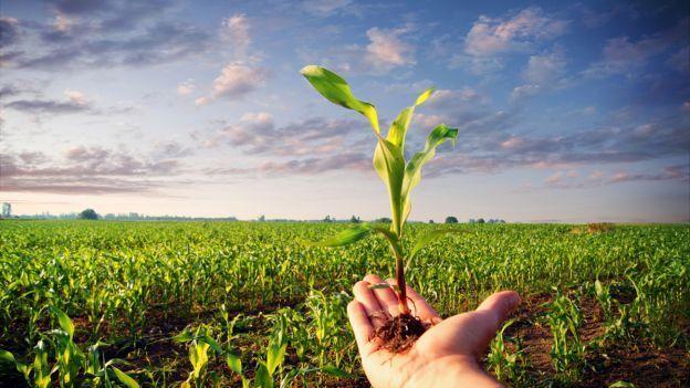 FederBio soddisfatta per la mozione che limita l'uso di pesticidi