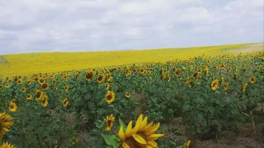 Assitol: per gli oli da semi un futuro sempre piú green