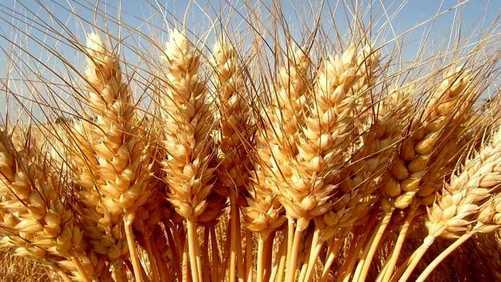 Origine del grano duro: Agcm sanziona Lidl per 1 mln di euro