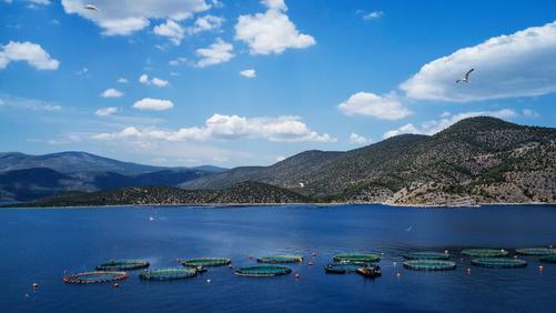 HAPO – Hellenic Aquaculture Producers Organization – conferma il suo impegno a tutela dell'ecosistema marino e del benessere dei pesci, per un'acquacoltura etica e sostenibile