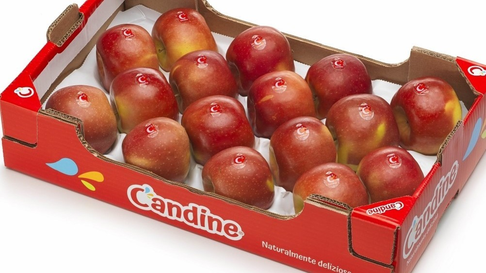 Apofruit: la mela Candine arriva sui mercati