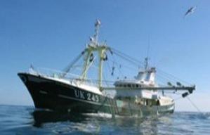 I consumatori dicono no al tonno in scatola che minaccia la specie