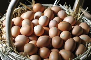 Uova fresche, la vera novità è nell'allevamento