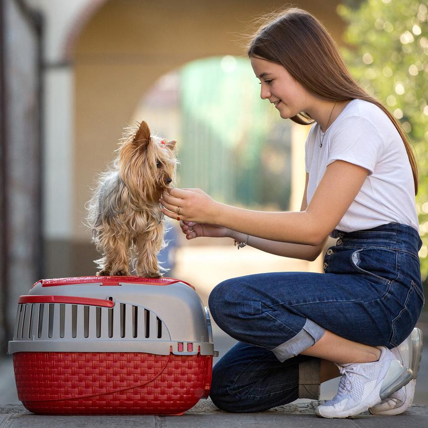 Viaggiare con gli animali domestici: trasportino Tour