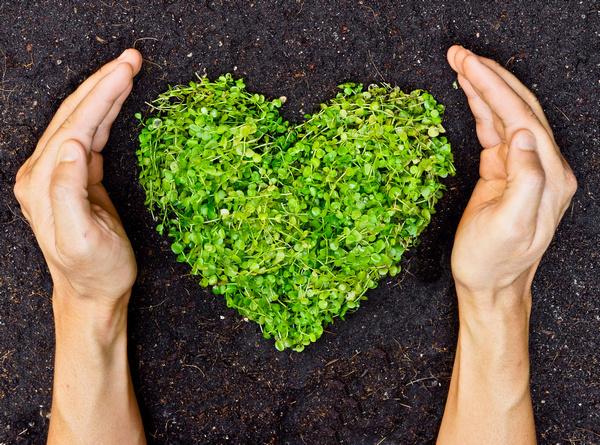Sostenibilità, un obiettivo da raggiungere, per amore e per forza