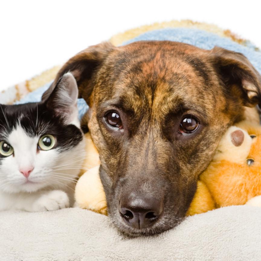 Animali domestici, quanto ci costano?