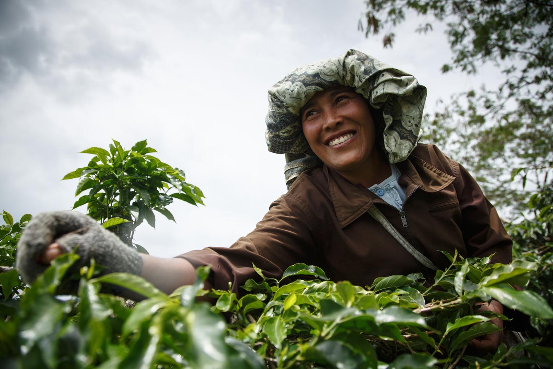Caffè sostenibile: i consumatori lo chiedono, i retailer rispondono