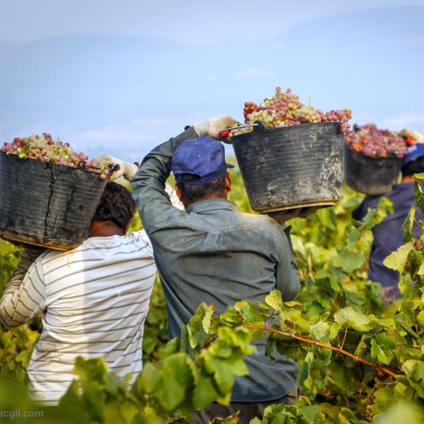 L'Italia si conferma primo produttore mondiale di vino