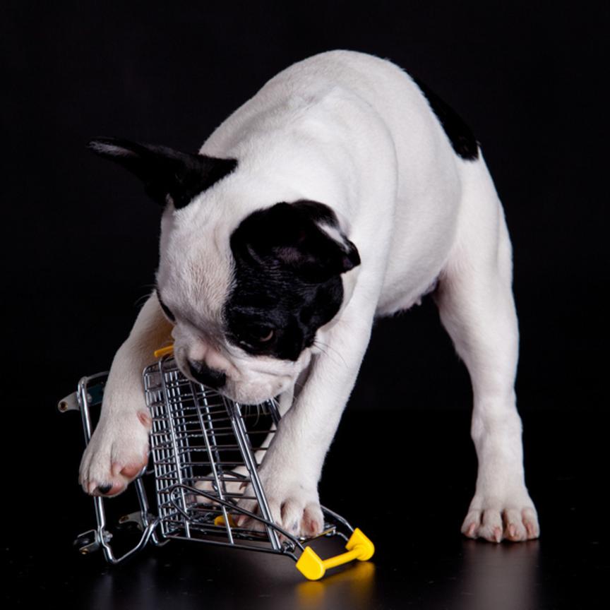 Cani al supermercato: prove di stop ma le regole non sono chiare