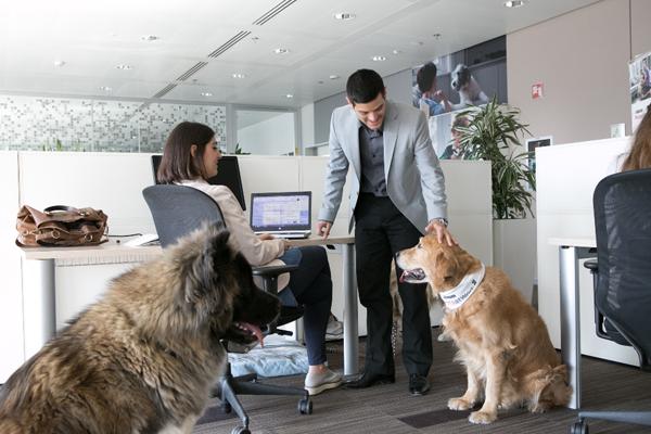 Un ambiente lavorativo pet-friendly aumenta la produttività?
