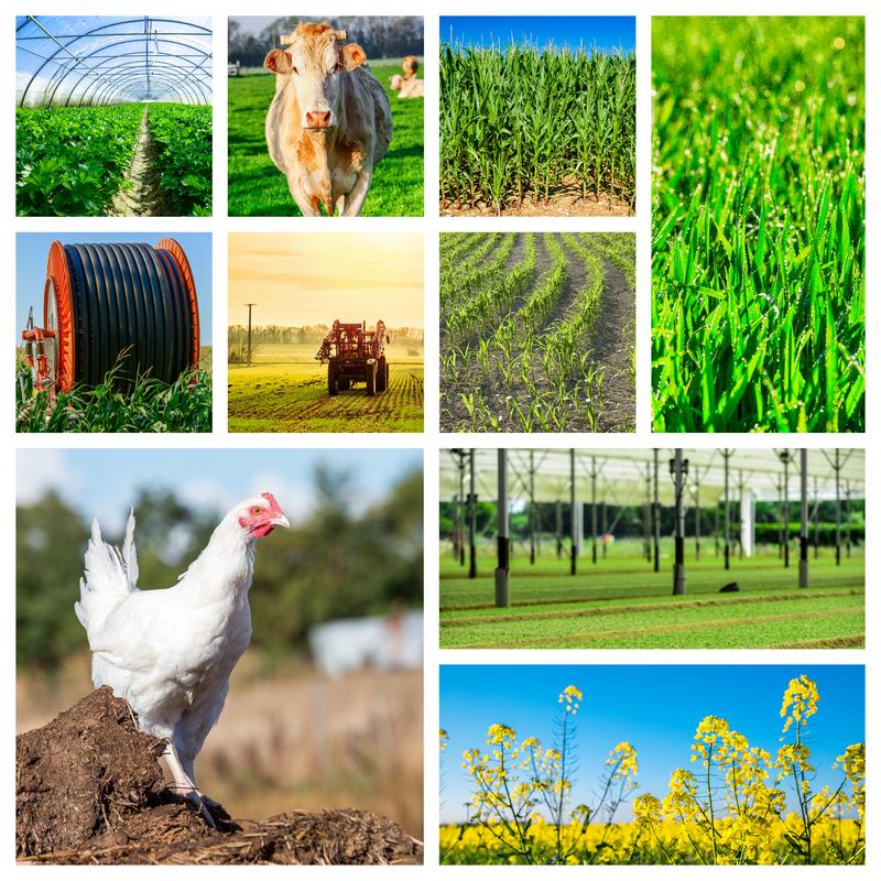 Agroalimentare: la filiera tiene, ma le criticità aumentano
