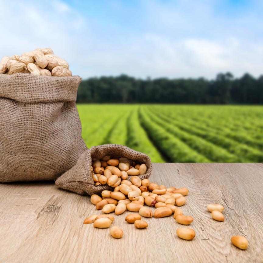 Nasce la filiera dell'arachide italiana by BF, Coldiretti, Noberasco