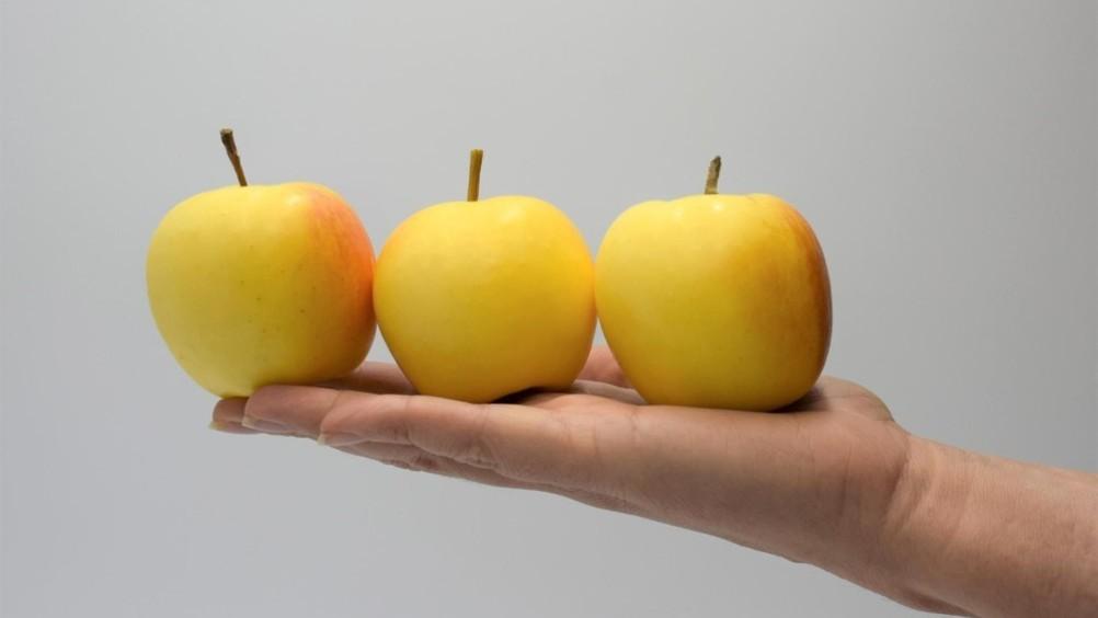 Nasce Snacking Project, nuova società consortile per sviluppare il mercato delle mele di piccolo calibro