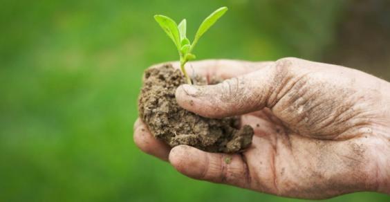 FederBio commenta il nuovo Regolamento europeo sull'agricoltura biologica
