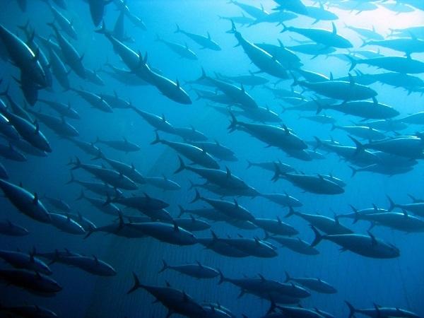 Findus rafforza l'impegno nella sostenibilità ittica