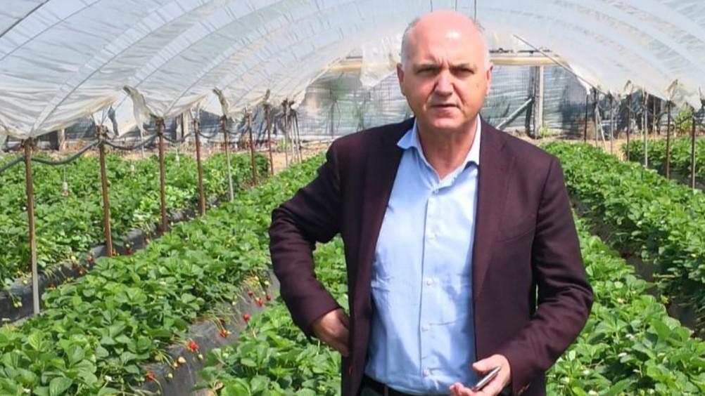 Le fragole d'inverno: in crescita i consumi in Europa