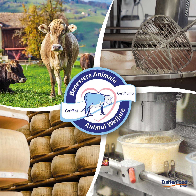 Le iniziative sostenibili di DalterFood Group investono la filiera del Parmigiano Reggiano