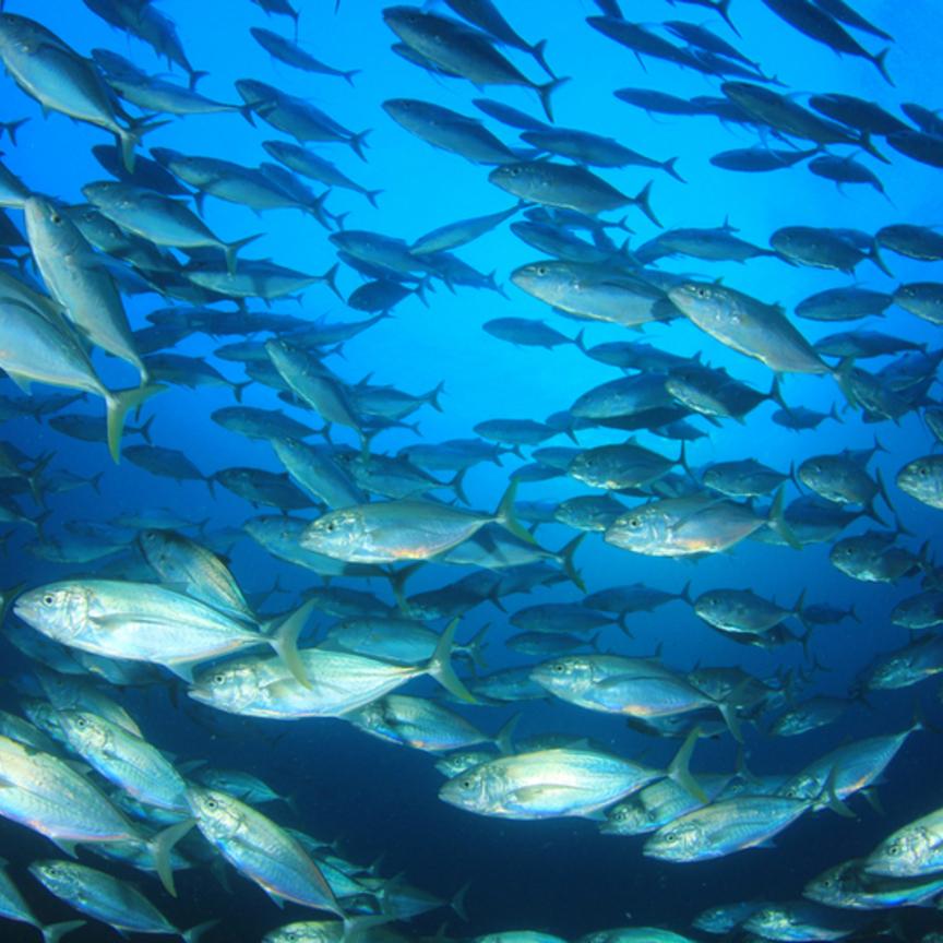Bolton si mangia la filiera tonno dell'americana Tri Marine