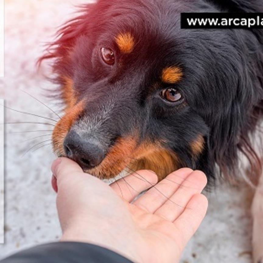 Arcaplanet: nel 2018 donate 160 tonnellate di cibo per pet