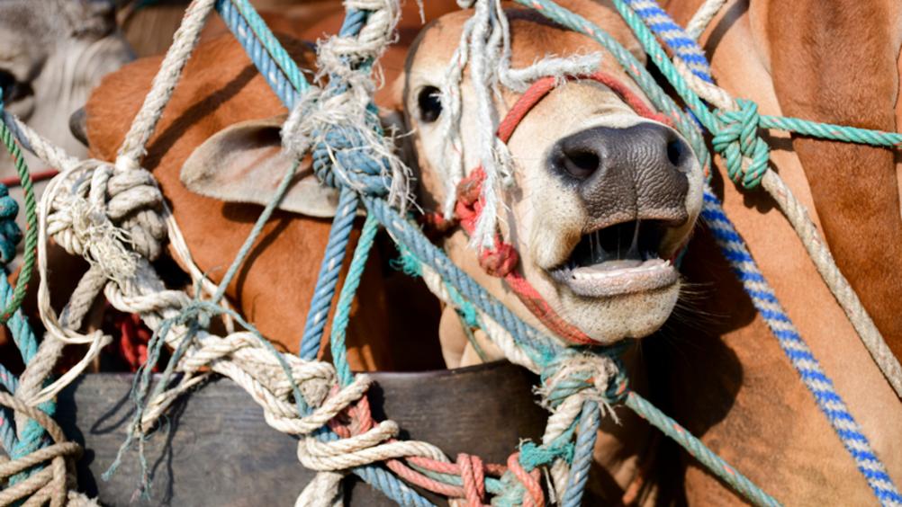 Ventisette ministri propongo un marchio Ue per il benessere animale