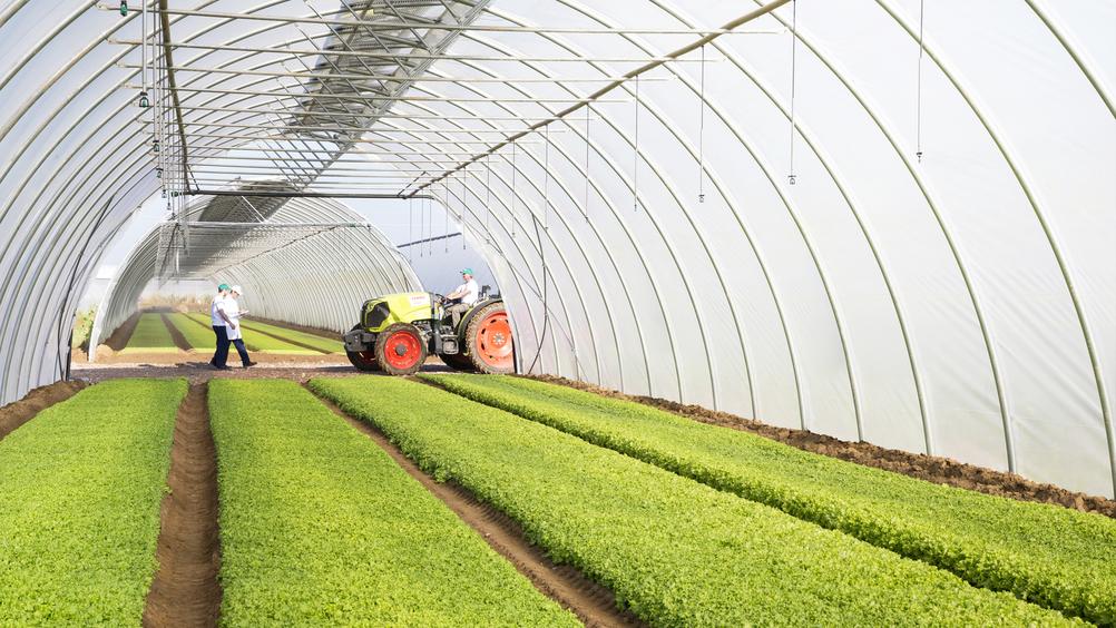 La Linea Verde, un 2021 a tutta innovazione: tra nuovi progetti e lanci di prodotto
