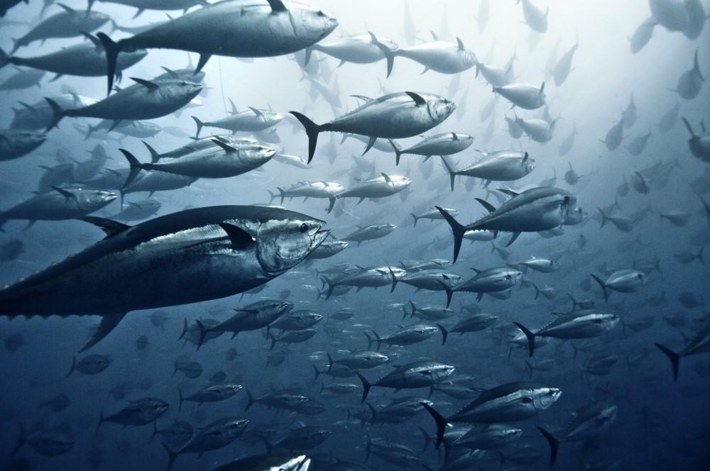 Mare Aperto conferma il suo impegno nei confronti della pesca sostenibile