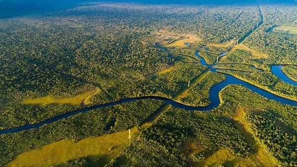 Nestlé: oltre i tre quarti della supply chain è deforestation-free