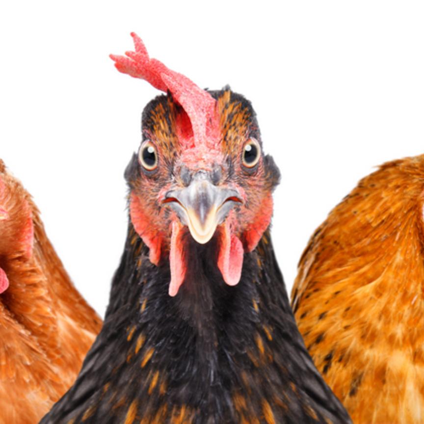 Barilla e Galbusera vincono nel benessere animale