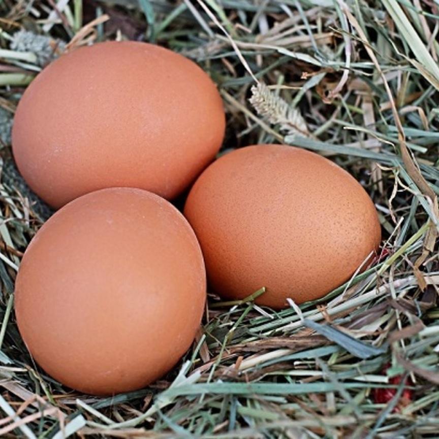 Uova: è boom per quelle da allevamento a terra o all'aperto