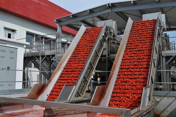 OI Pomodoro: aumentano passate, biologico e prodotti per il commercio al dettaglio