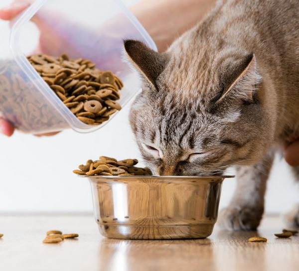 Il pet food si avvicina ai due miliardi di euro