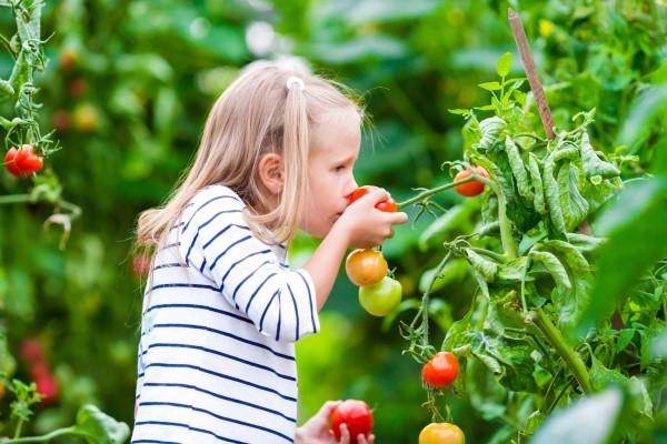 Eit food: mostrare immagini di verdure ai bambini può favorirne il consumo