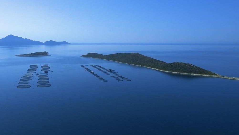 """HAPO – Hellenic Aquaculture Producers Organization – porta sulle nostre tavole tutto il sapore e la qualità del pesce fresco greco, """"firmato"""" Fish From Greece"""