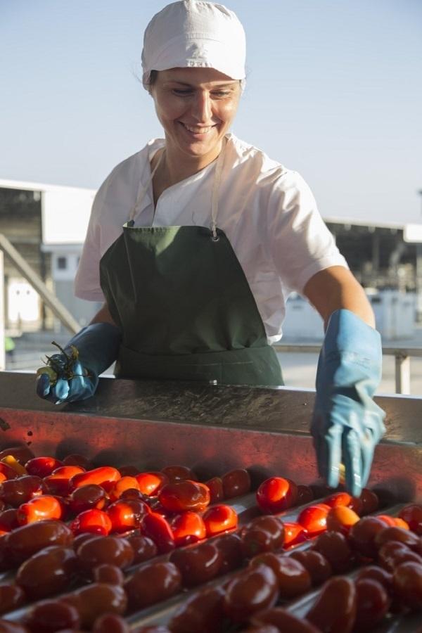 Coldiretti e Princes siglano accordo per la sostenibilità del pomodoro Made in Italy